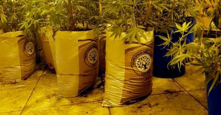 Plus de Rs 120 millions de drogue ont été saisies en quelques jours.