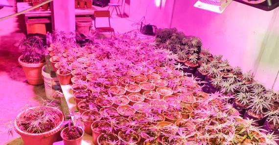 Du cannabis et de l'héroïne ont été saisis durant la semaine écoulée.