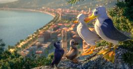 La fraternité inter-espèces pourra-t-elle avoir lieu avec notre jeune petit oiseau ?